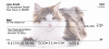 Maine Coon Cats Personal Checks | GCA-10