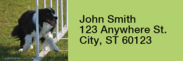 Agility Border Collies Rectangle Address Labels