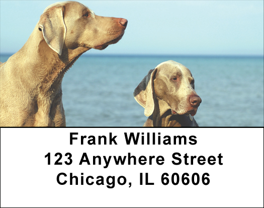 Weimaraner Labels - Weimaraner Address Labels