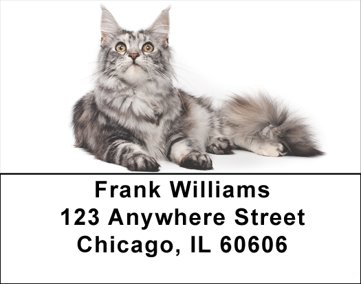 Maine Coon Cats Address Labels - Cat Labels