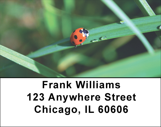 Ladybug Labels - Ladybugs on Leaves Address Label Sets