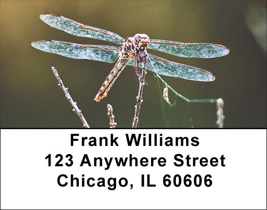 Dragonflies Address Labels - Dragonfly Labels