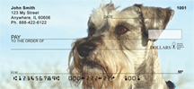 Schnauzer Checks - Miniature Schnauzers Personal Checks