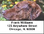 Chesapeake Bay Retriever Address Labels - Retrievers Labels
