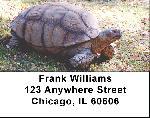 Tortoise Labels - Tortoise Address Labels