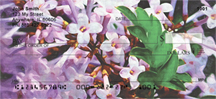 Lilac Cutleaf in Oil Personal Checks - Cutleaf Lilacs Checks