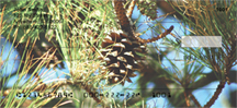 Pine Cone Checks - Pine Cones Personal Checks