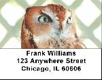 Screech Owl Labels - Screech Owl Address Labels