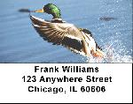 Duck Labels - Mallard Ducks Address Labels