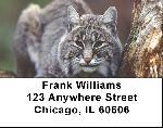 Bobcat Labels - Bobcats Address Labels