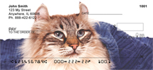 American Curl Checks - American Curl Cat Personal Checks