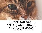 Somali Labels - Somali Cat Address Labels